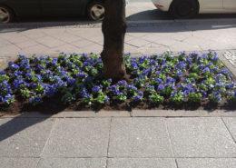 Kaiserdamm Blumen